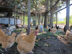 Stone Edge Farm Chicken Coop - Booker and Butler Concierges