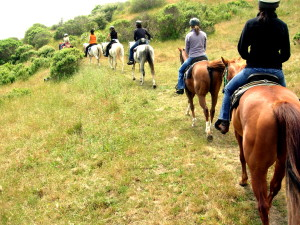 Napa Horseback Riding - Booker and Butler Concierges