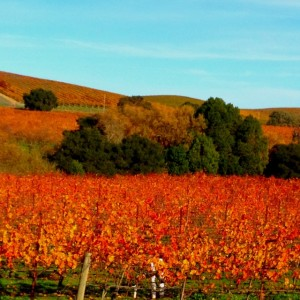 Fall Colors in Napa - Booker and Butler Concierges